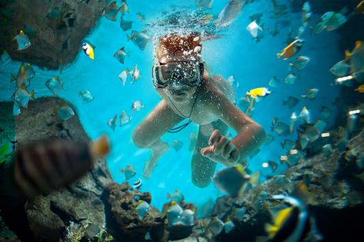 珀斯水族馆(Aquarium)