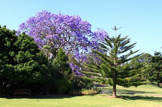 悉尼皇家植物园 (Royal Botanic Gardens)