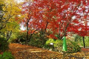 澳大利亚墨尔本春季观赏郁金香一日游(每年9-10月)