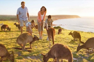 黄金海岸一日游-澳大利亚动物园