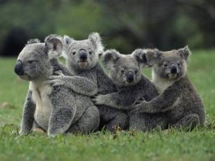 澳大利亚墨尔本+布里斯班+黄金海岸7日6晚包车游·墨尔本大洋路+企鹅岛+悉尼歌剧院+蓝山公园+可伦宾动物园+主题乐园+捕蟹之旅