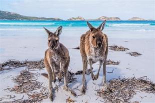 澳大利亚阿德莱德+墨尔本双城6日5晚包车游·【深度全景之旅】包含 澳洲内陆机票+金牌中文导游+精选4星住宿+十二门徒+神仙企鹅归巢+石灰岩海岸+袋鼠岛+巴罗莎山谷+汉多夫德国村+格雷尔海滩