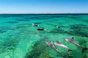 澳大利亚悉尼+汉密尔顿+墨尔本十二日游·行程特色: 悉尼酒庄+哈密尔顿+墨尔本大洋路全景游
